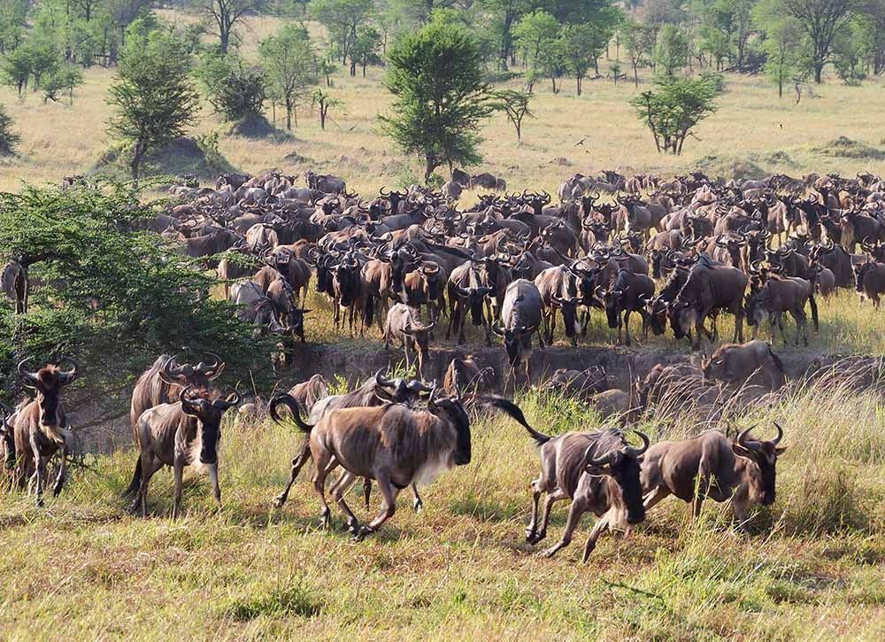 great migration 2