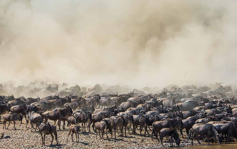 great migration 4